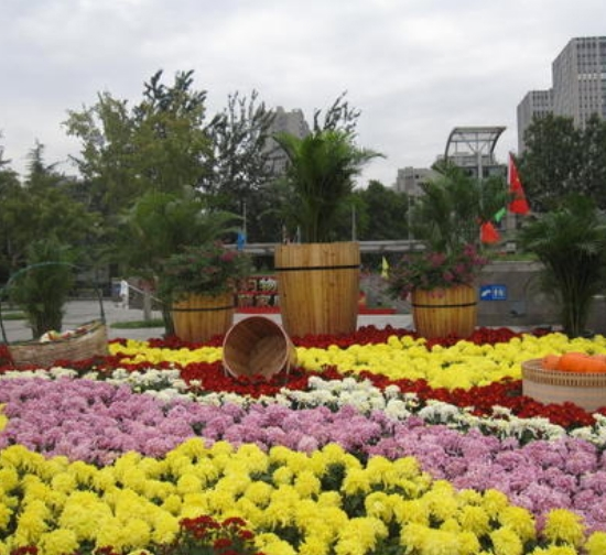 城市菊展设计