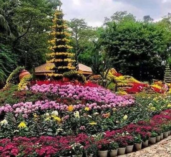 城市广场菊展施工