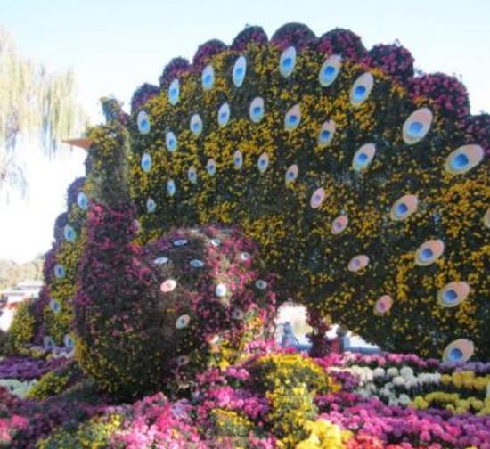 景区菊花造型展施工